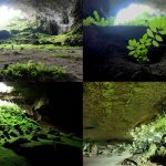 Plants That Grow In Caves
