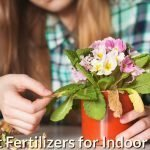 Best Fertilizers for Indoor Plants