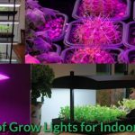 Types of Grow Lights for Indoor Plants
