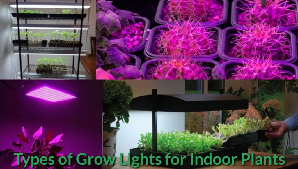 Led and Halogen grow lights for plants.
