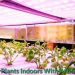 Guide on Growing Plants Indoors With Artificial Light