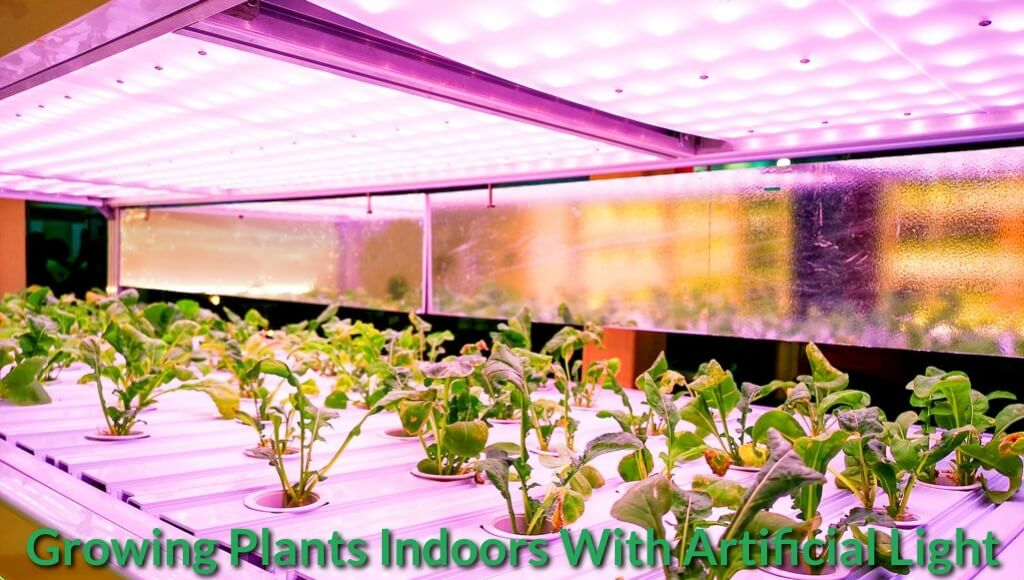Indoor grow light environment.
