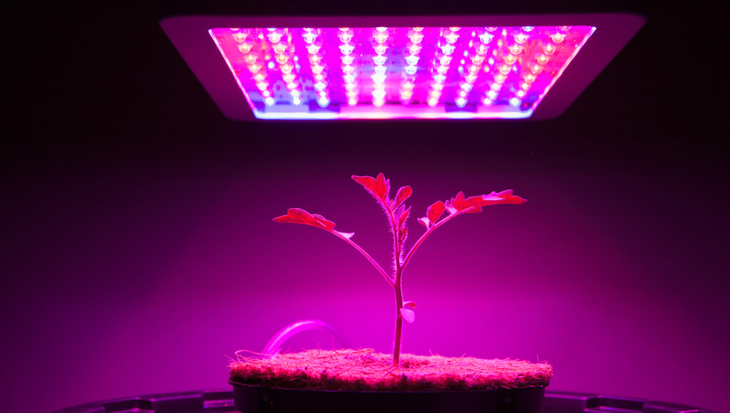 How close the LED should be above the plant?