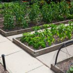 How to Protect Raised Garden Beds
