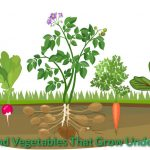Fruits and Vegetables That Grow Underground